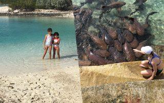 Staniel Key Island